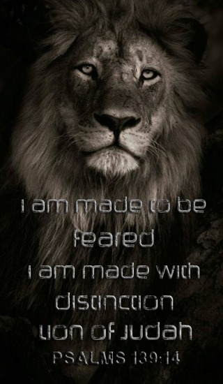 beautiful lion of Judah