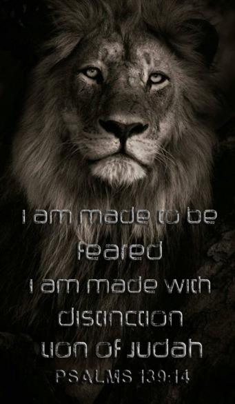 beautiful lion of Judah